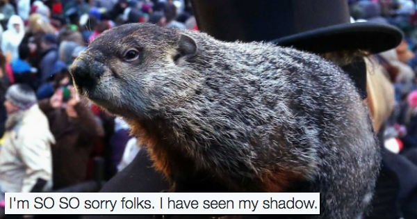 twitter,phil,groundhog day,groundhog,animals,holidays