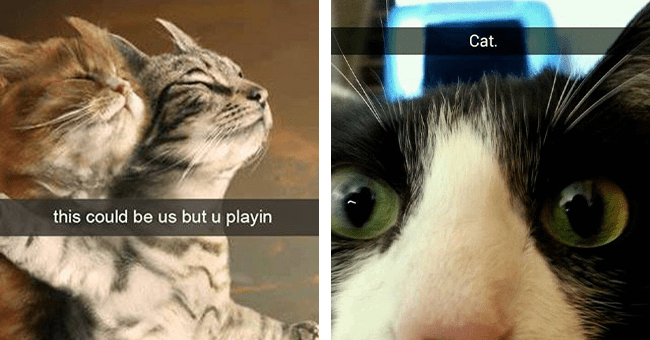 """16 cat snaps 