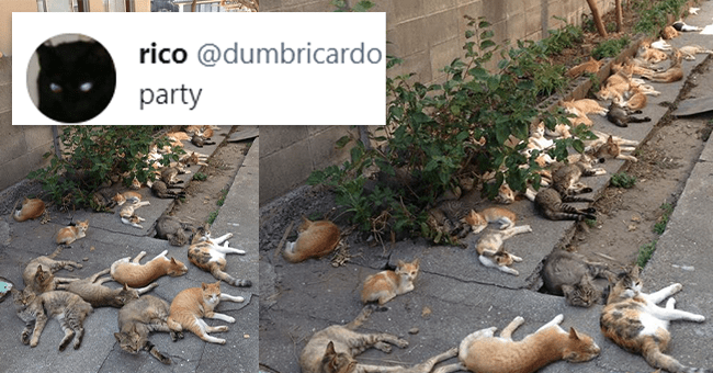 """12 cat tweets 