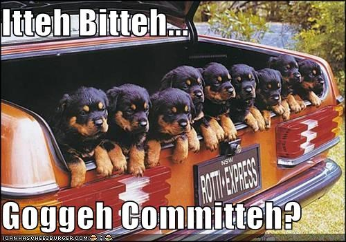 car cute puppy rottweiler - 1475839744