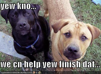 help hungry labrador nom nom nom outside pitbull - 1475953408