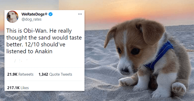 12 dog tweets | thumbnail background puppy sitting on beach with tweet text in foreground