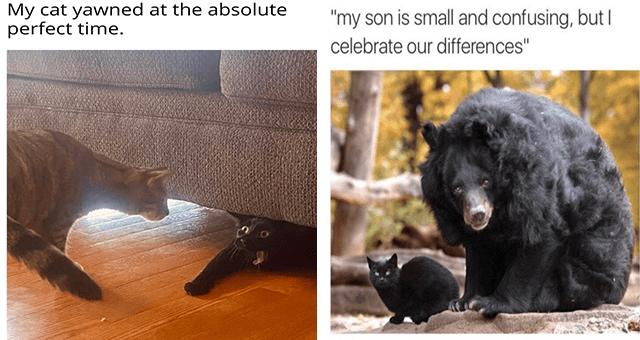 """Caturday cat memes 