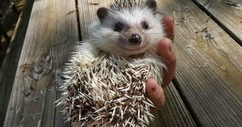 list cute hedgehog animals - 1476357
