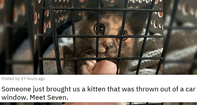 posts of animals newly adopted this week | thumbnail includes a picture of a cat reaching out to a human through its cage 'Someone just brought us a kitten that was thrown out of a car window. Meet Seven. u/Carmacktron'