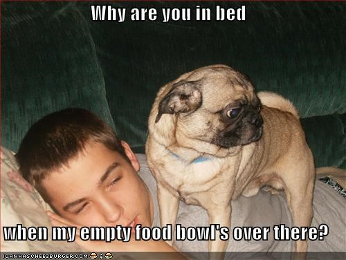 bed,bowl,empty,food,human,hungry,pug,sleeping