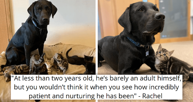 """story about a rescue dog adopting seven kittens 