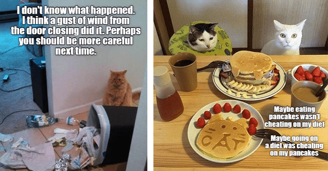 25 cat memes | thumbnail left cat meme with garbage spilled over, thumbnail right two cats meme with pancakes and cheating on diet