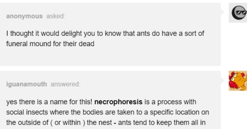 A funny Tumblr post about the behavioral science behind ants' process for treating their dead.