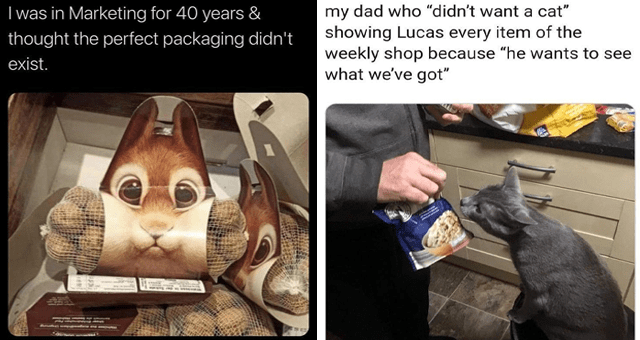 """list of funny and fresh animal memes 