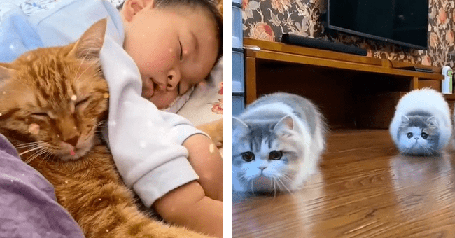 5 funny cat videos | thumbnail left cat and baby cuddling, thumbnail right two cats zooming towards camera