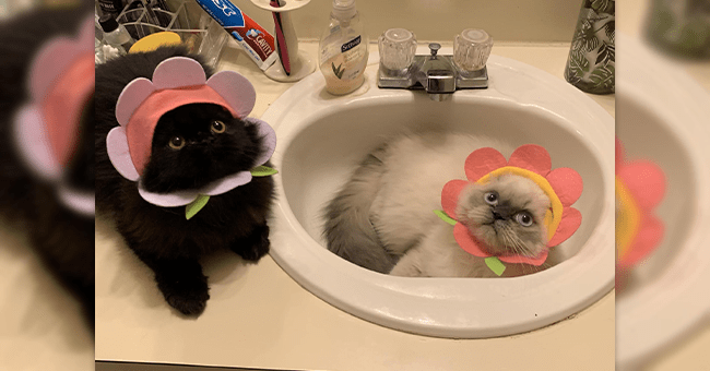 12 images of cats with flower and fruit hats | thumbnail two cats with flower hats large image