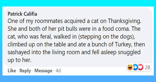 Facebook comments about cats adopting humans | thumbnail includes one Facebook comment 'Font - Patrick Califia One of my roommates acquired a cat on Thanksgiving. She and both of her pit bulls were in a food coma. The cat, who was feral, walked in (stepping on the dogs), climbed up on the table and ate a bunch of Turkey, then sashayed into the living room and fell asleep snuggled up to her. O 28 Like · Reply Message 4d'