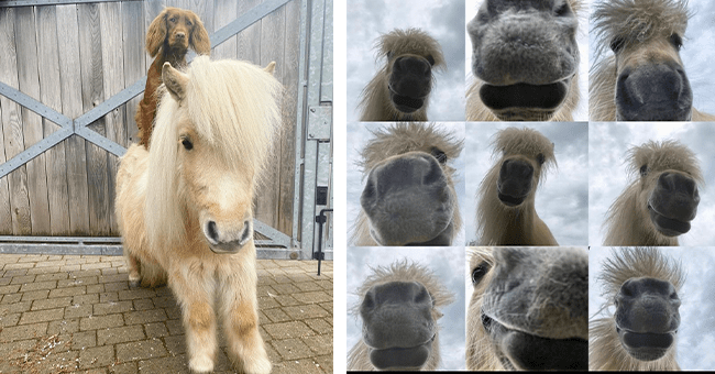 14 images of teddy small pony | thumbnail left teddy lying down with dog on top of him, thumbnail right collage of teddy seflies