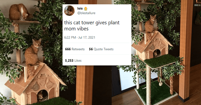 12 animals tweets | thumbnail image of cat / plant tower with cats, foreground tweet text