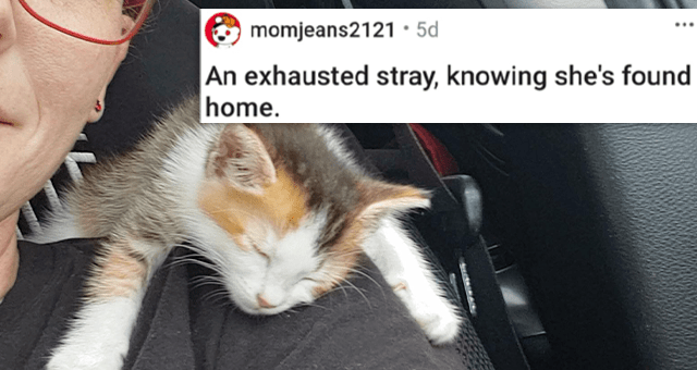 pics of the cutest animals of the week | thumbnail includes a picture of a kitten sleeping on a woman's shoulder 'An exhausted stray, knowing she's found home. u/momjeans2121'
