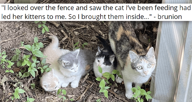 """imgur thread about a stray cat bringing her kittens to her human 