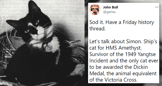 twitter thread about the HMS Amethyst ship cat | thumbnail includes a black and white picture of a cat and a tweet 'Cat - John Bull ... @garius Sod it. Have a Friday history thread. Let's talk about Simon. Ship's cat for HMS Amethyst. Survivor of the 1949 Yangtse Incident and the only cat ever to be awarded the Dickin Medal, the animal equivalent of the Victoria Cross. 2:47 PM Jul 16, 2021 - Twitter Web App'
