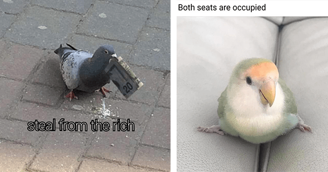 30 bird memes | thumbnail left pigeon with cash in mouth steal from the rich, thumbnail right bird meme both seats are occupied