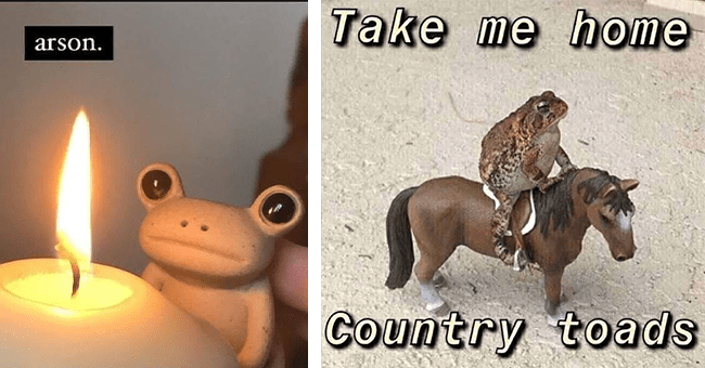 25 frog memes | thumbnail left frog looking at candle arson meme, thumbnail right take me home country toads meme