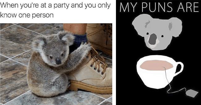 12 koala memes | thumbnail left koala meme holding foot when you're at a party, thumbnail right my puns are koala tea wordplay meme