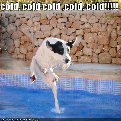 australian cattle dog cold swimming water - 1480178432