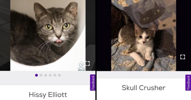 funny pet finder names