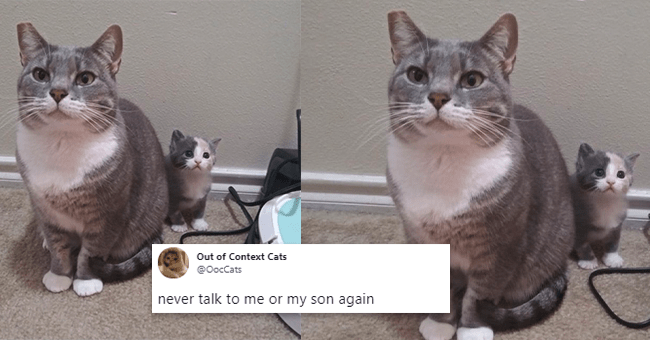 13 cat tweets | thumbnail cat and kitten with tweet text don't talk to me or my son again