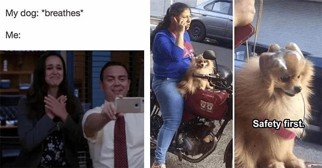 15 dog memes | thumbnail left dog meme my dog breathes, thumbnail right dog on bike with helmet safety first meme
