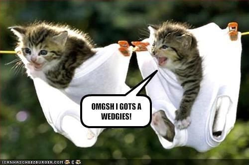 cute kitten underwear - 1480795904