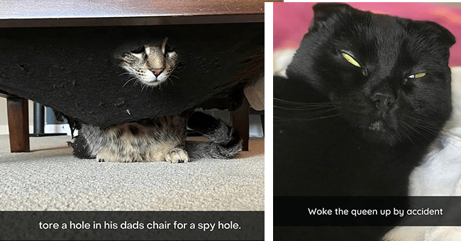 16 cat snaps | thumbnail left cat looking through spy hole in chair, thumbnail right queen woke up by accident