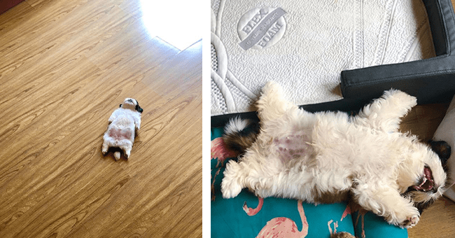 25 images of puppy sleeping on its back | thumbnail left puppy sleeping on floor on back, thumbnail right puppy sleeping with legs and arms stretched out