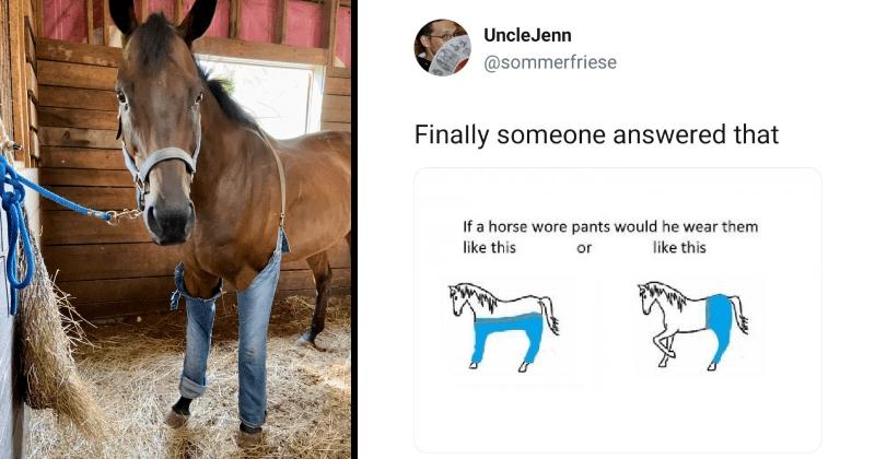 horse, pants, jeans, twitter, lol, philosophy, fashion, horses