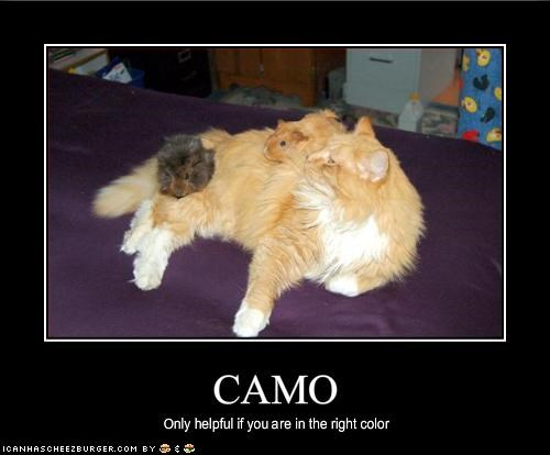camouflage FAIL lolguineas - 1481550080