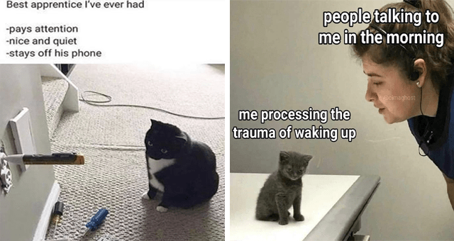 Caturday cat memes | thumbnail includes two memes including a cat looking at the construction of a wall 'Cat - Best apprentice l've ever had -pays attention -nice and quiet -stays off his phone' and a human looking at a tired kitten 'Felidae - people talking to me in the morning @oimaghost me processing the trauma of waking up'