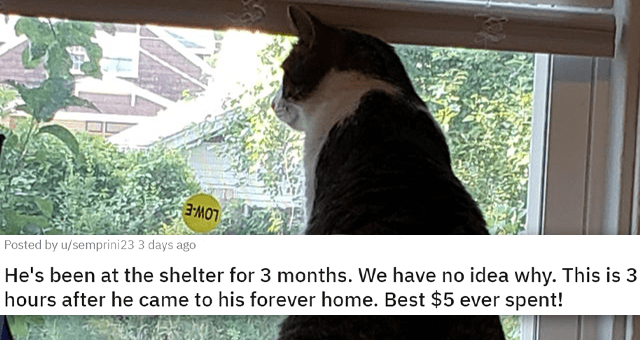 posts of animals newly adopted this week | thumbnail includes a picture of a cat sitting on a windowsill 'He's been at the shelter for 3 months. We have no idea why. This is 3 hours after he came to his forever home. Best $5 ever spent! u/semprini23'