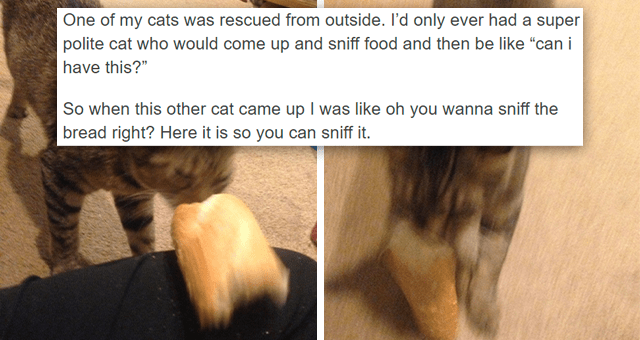 """tumblr thread about cats' weird obsession with bread 