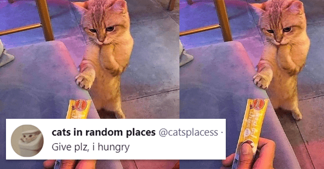 13 cat tweets | thumbnail hand with food extended towards hungry cat with tweet text in foreground