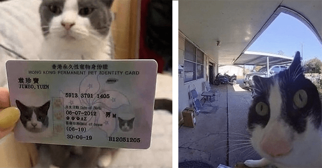 12 dank cat images | thumbnail left cat with id, thumbnail right cat fish eye looking at camera at weird angle