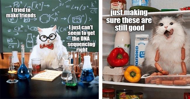 20 cat memes | thumbnail left cat scientist meme, thumbnail right just making sure these are still good cat in fridge meme