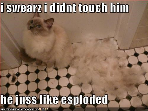 exploded fur lies lolcats murder swearing - 1482947840