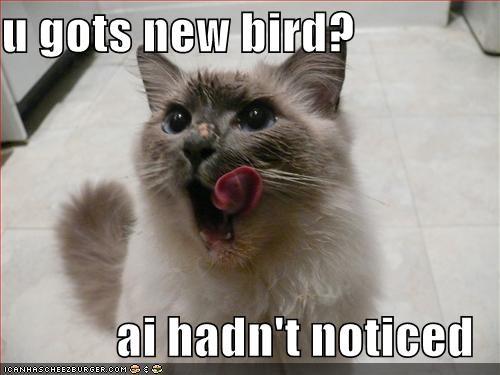 bird lies lolcats murder nom nom nom - 1482958592