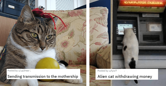 12 cats that look like aliens | thumbnail left cat with toys trying to contact mothership plus text, thumbnail left cat withdrawing money from atm