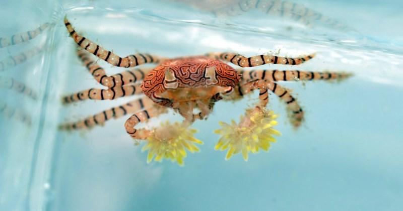 list crabs cute animals - 1483269