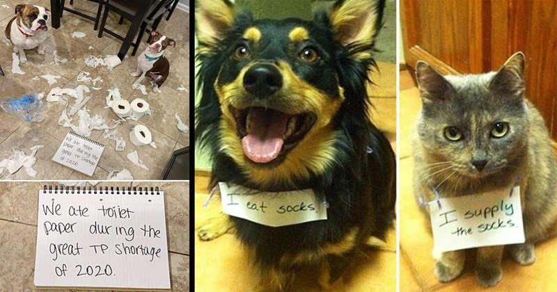 dogs, cats, bad dogs, dog shaming, funny, wholesome, cute, animals, memes, animal memes, dog memes, funny pics, pets