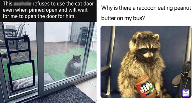 list of funny and fresh animal memes | thumbnail includes two memes including a cat behind a glass door 'Cat - This asshole refuses to use the cat door even when pinned open and will wait for me to open the door for him.' and a racoon eating peanut butter 'Photograph - Why is there a raccoon eating peanut butter on my bus? Jife AKAMS MEMES'
