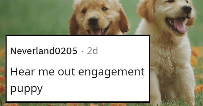 alternatives to engagement rings | thumbnail text - Neverland0205 · 2d Hear me out engagement puppy
