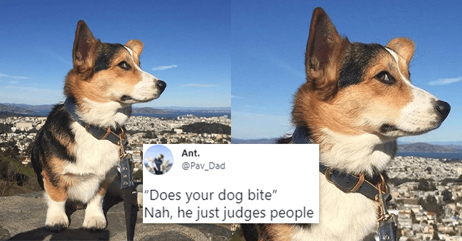 12 animal themed tweets | thumbnail dog with stank eye looking at camera with tweet text in foreground
