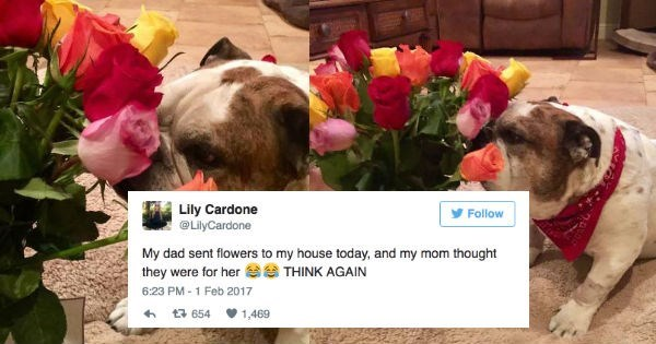 husband sends flowers to his beloved dog