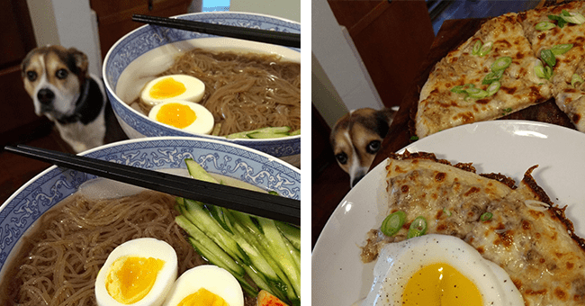 31 images of egg themed food and dog | thumbnail left and right egg themed food with dog behind